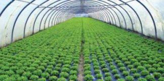 Pengertian manajemen dalam agribisnis
