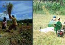 Modernisasi dalam teknologi pertanian menuju industrialisasi