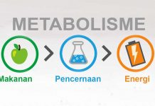 Pengertian metabolisme dan proses metabolisme serta fungis metabolisme