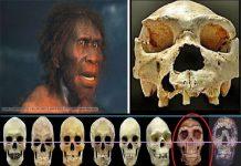 Belajar sejarah manusia purba homo erectus Pithecantrophus mojokertensis