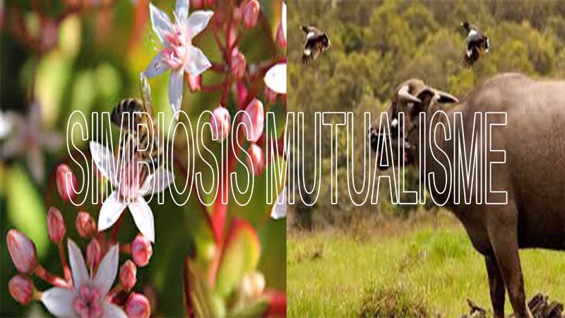 Pengertian simbiosis mutualisme, simbiosis parasitisme, simbiosis komensalisme