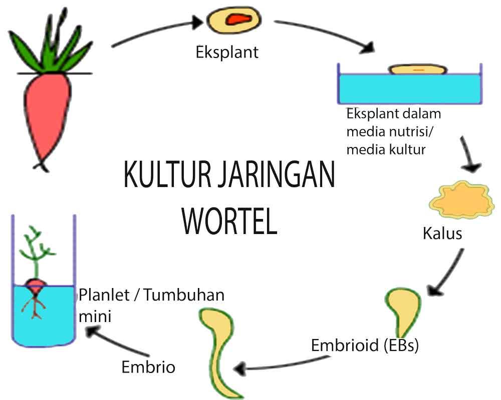 Pengertian bioteknologi contoh perbedaan macam bioteknologi pengertian bioteknologi dan contoh bioteknologi ccuart Choice Image