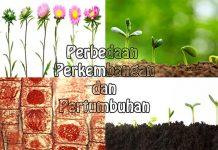 Penjelasan perbedaan pertumbuhan dan perkembangan