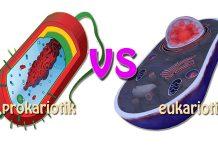perbedaan sel prokariotik dan eukariotik