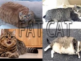 Effective and efficient ways to gain your cat weight