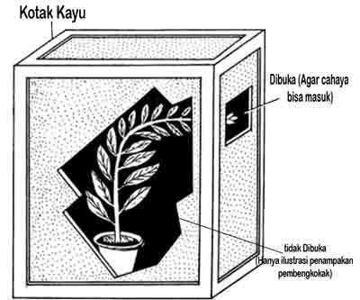 Contoh percobaan fototropisme