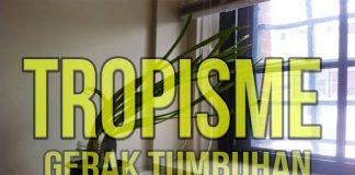 pengertian gerak tropisme dan contoh tropisme dan jenis tropisme
