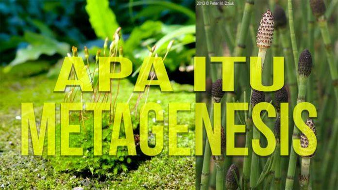 pengertian metagenesis