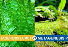 Perbedaan metagenesis paku dan lumut