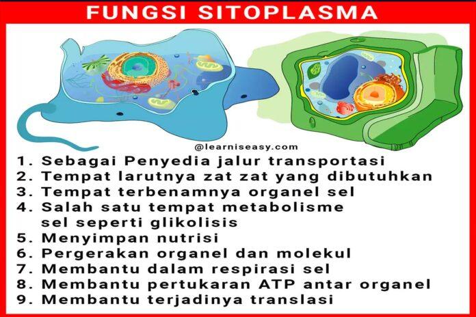 Fungsi sitoplasma pada sel hewan dan sel tumbuhan