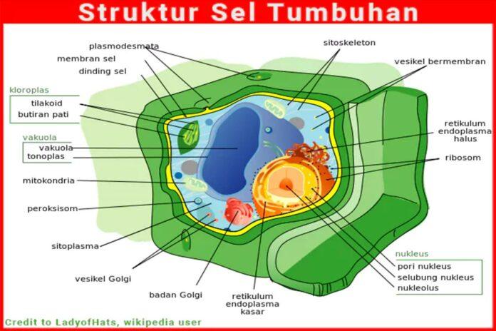 Struktur sel tumbuhan lengkap dengan organel sel dan dinding sel tumbuhan