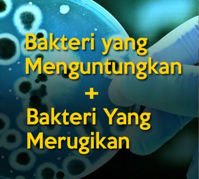 bakteri yang menguntungkan dan bakteri yang merugikan