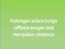 Hubungan antara bunga rafflesia dengan lalat merupakan simbiosis