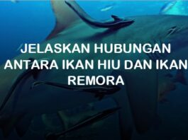 jelaskan hubungan antara ikan hiu dan ikan remora simbiosis komensalisme